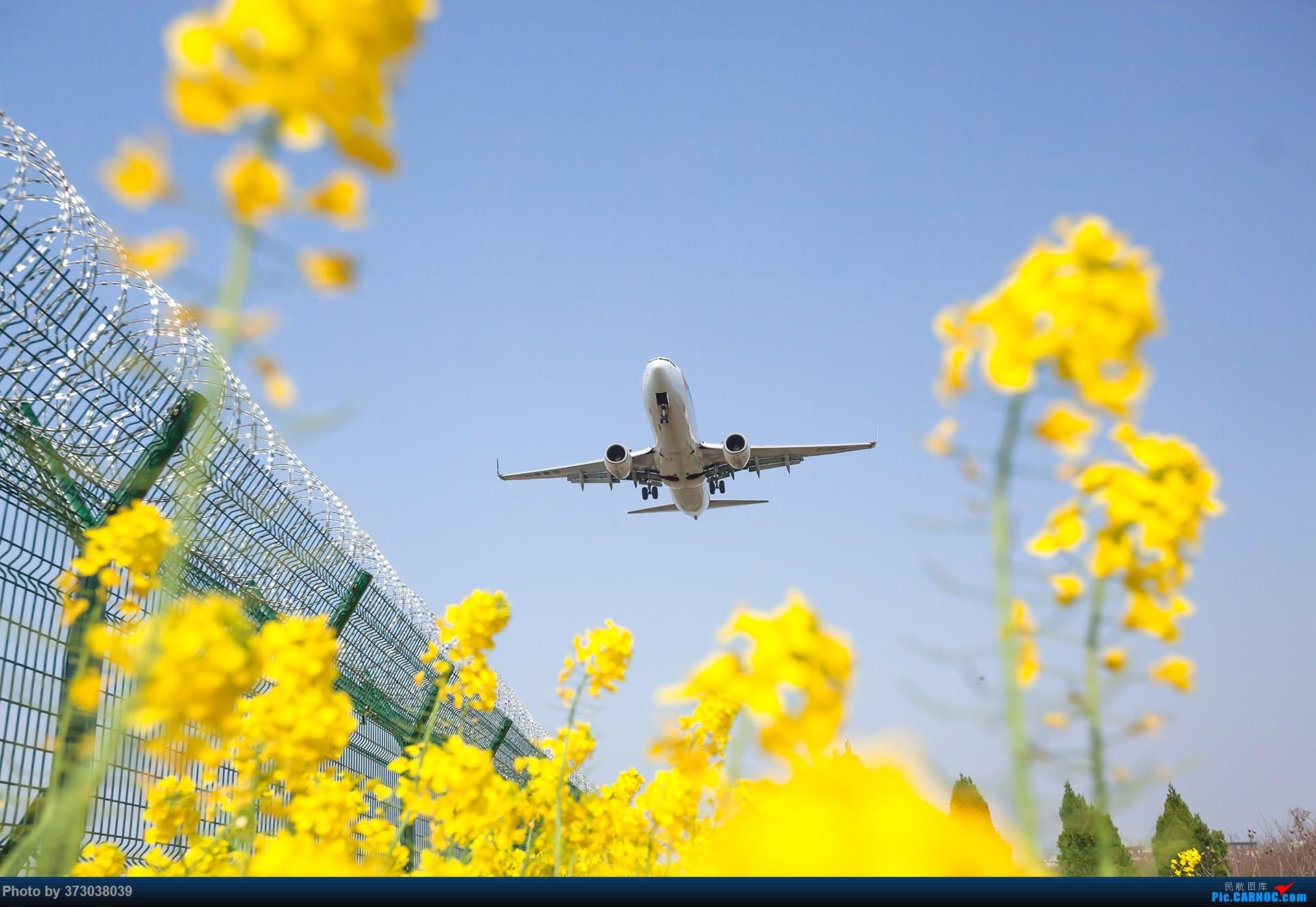 [原创]【杭州飞友会】HGH油菜花里射大鸟,放上一只三角翼风筝 BOEING 737-800 B-5726 中国杭州萧山国际机场