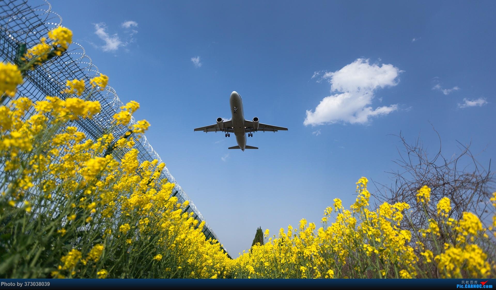 Re:[原创]【杭州飞友会】HGH油菜花里射大鸟,放上一只三角翼风筝 AIRBUS A320-200 B-6773 中国杭州萧山国际机场