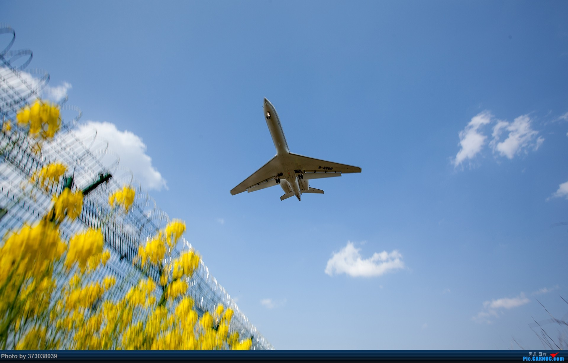 Re:[原创]【杭州飞友会】HGH油菜花里射大鸟,放上一只三角翼风筝 GULFSTREAM G550 B-8288 中国杭州萧山国际机场