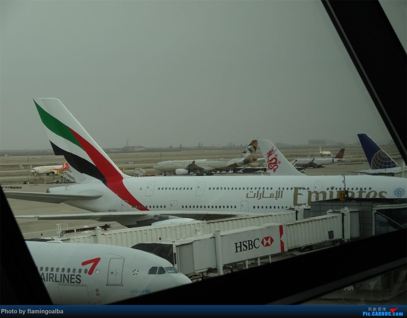 Re:[原创]浦东-达拉斯-纽瓦克-华盛顿里根-拉斯维加斯-洛杉矶-达拉斯-浦东 A380-800 A6-EOX 中国上海浦东国际机场