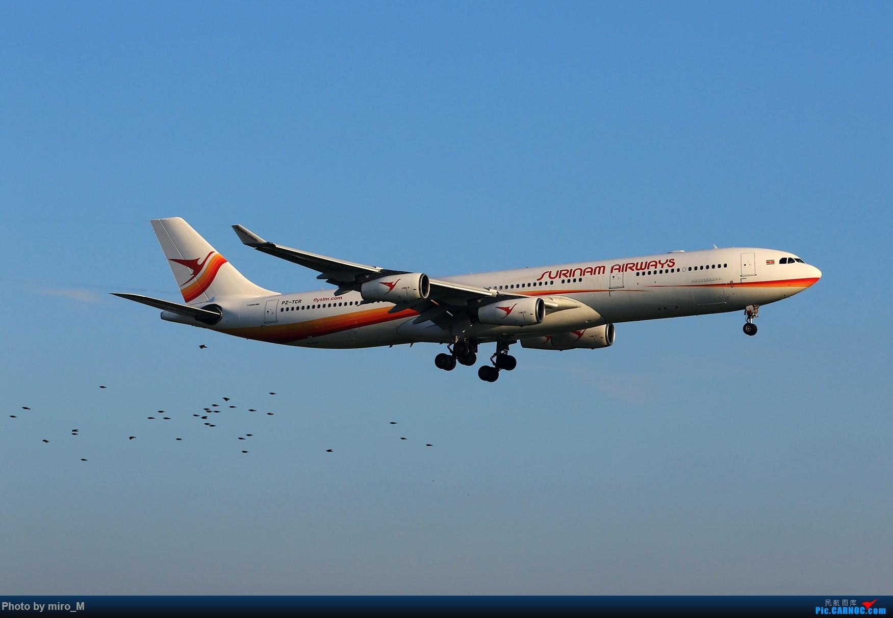 Re:[原创]欧洲小众机型体验之旅,附所到的机场拍机图片(中) AIRBUS A340-300 PZ-TCR AMS