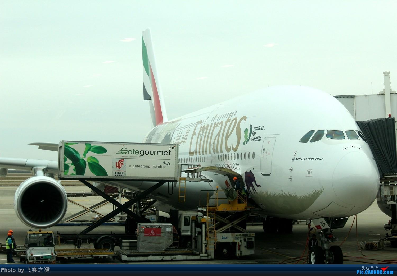 Re:[原创]飞翔之猫魔都见闻 AIRBUS A380-800  浦东国际机场