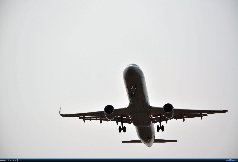 [原创]2017年鸡鸭图    中国北京首都国际机场