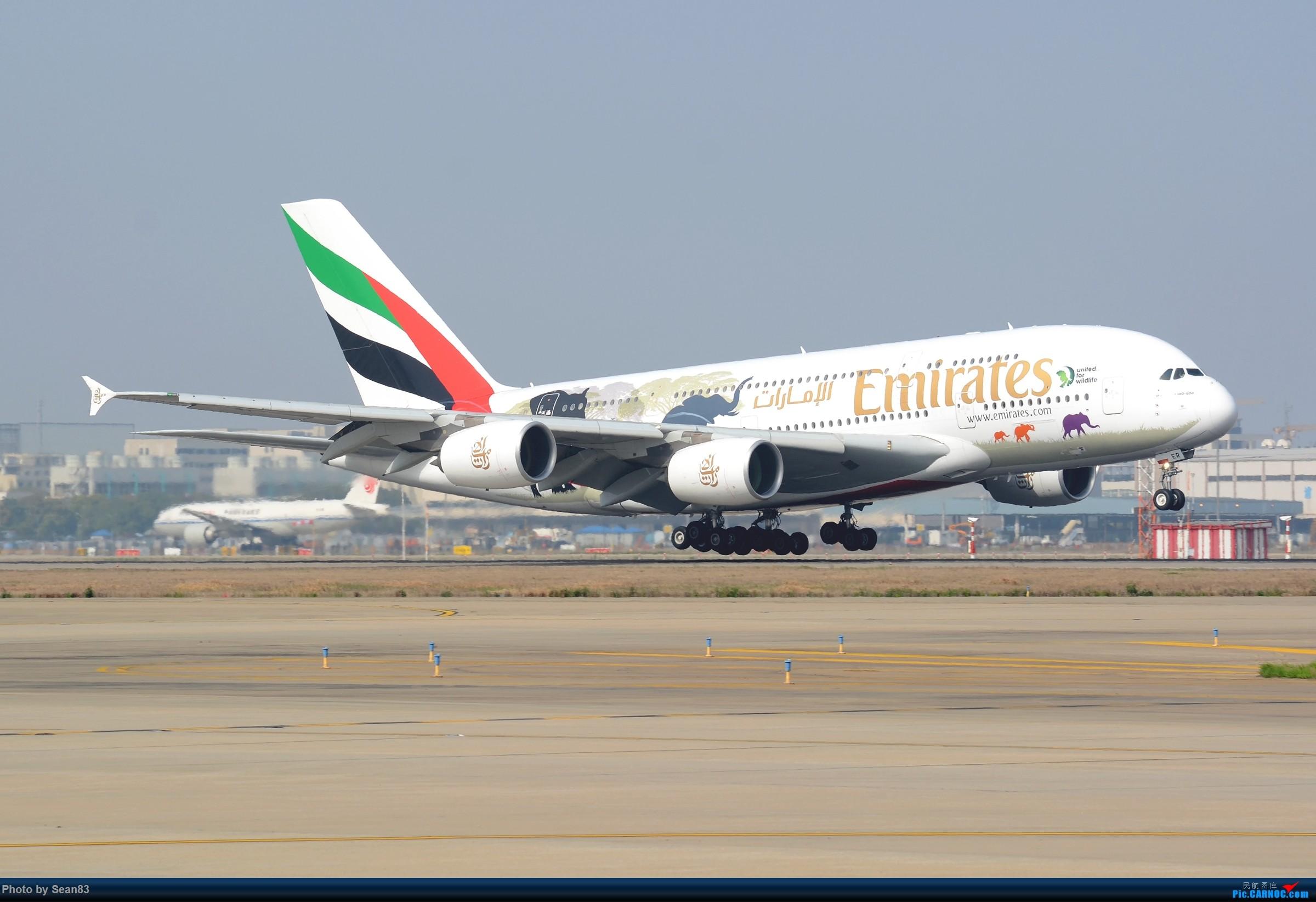 [原创](PVG)野生动物 AIRBUS A380-800 A6-EER 中国上海浦东国际机场