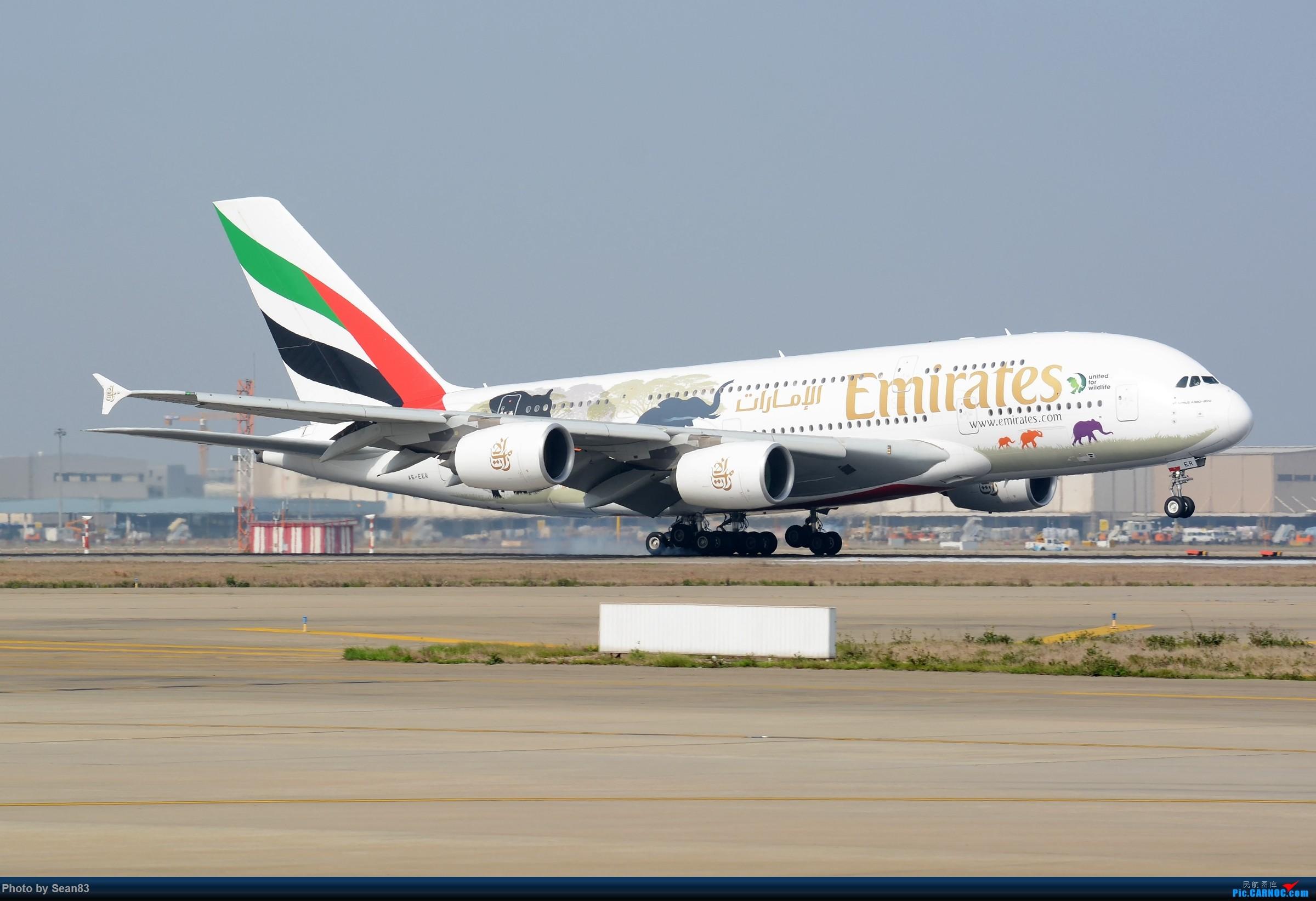 Re:[原创](PVG)野生动物 AIRBUS A380-800 A6-EER 中国上海浦东国际机场