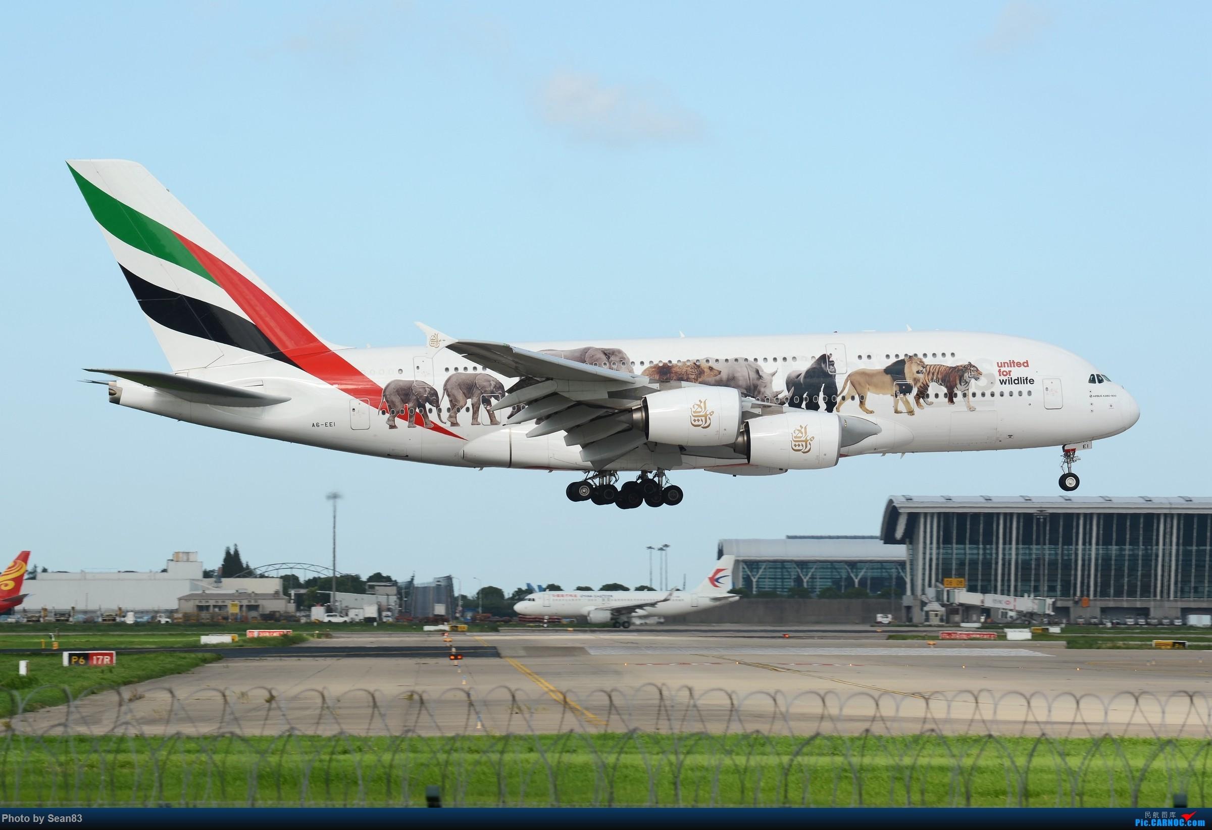 Re:[原创](PVG)野生动物 AIRBUS A380-800 A6-EEI 中国上海浦东国际机场