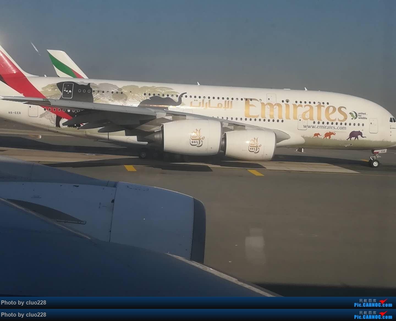 Re:[原创](PVG)野生动物 A380