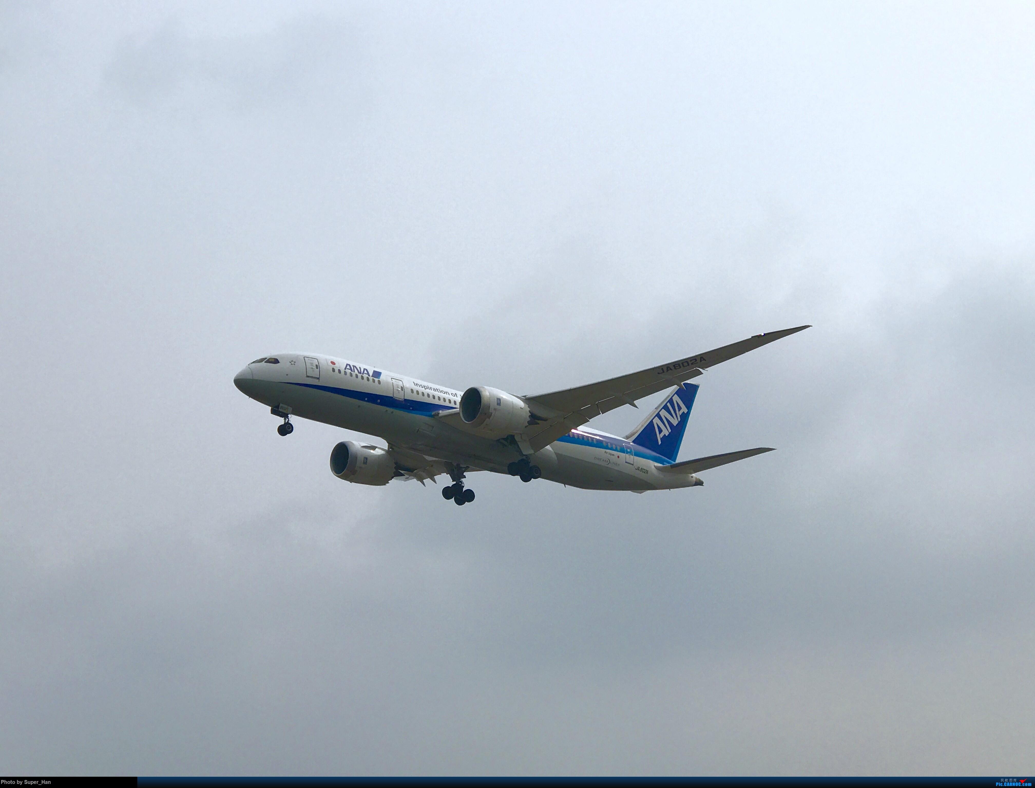 Re:[原创]0222SHA BOEING 787-8 JA802A 中国上海虹桥国际机场