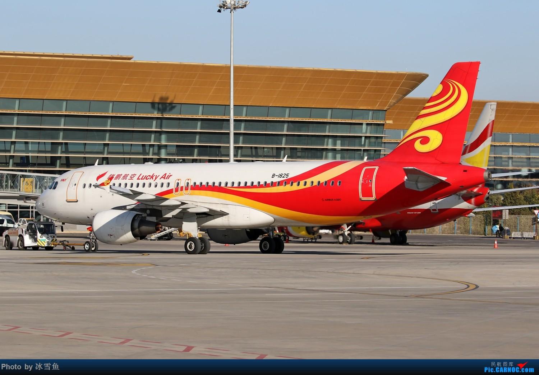 Re:[原创]【BLDDQ】长水组图 AIRBUS A320-200 B-1825 中国昆明长水国际机场