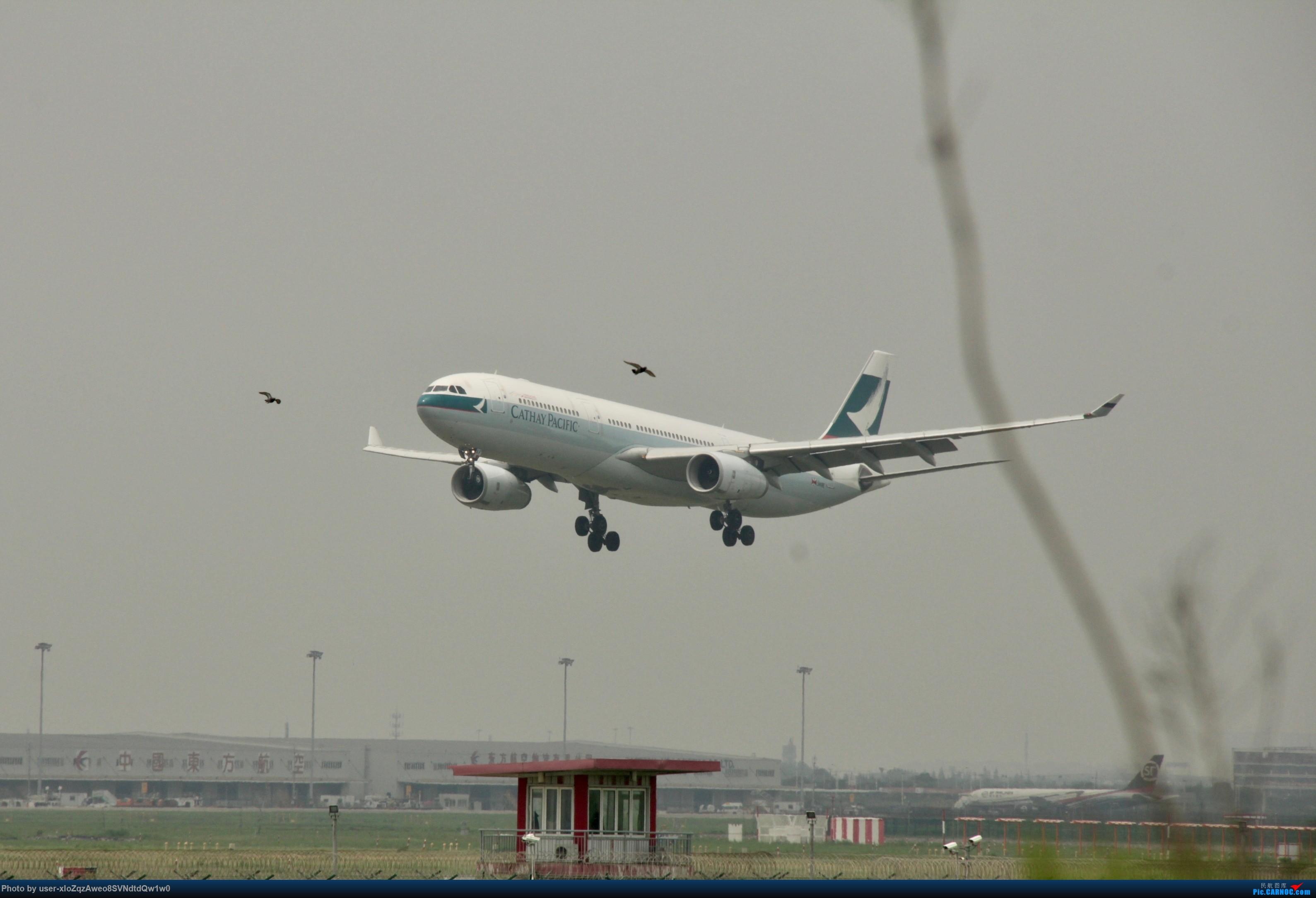 Re:[原创]07/28 PVG拍机贴 AIRBUS A330-300 B-LAF 中国上海浦东国际机场