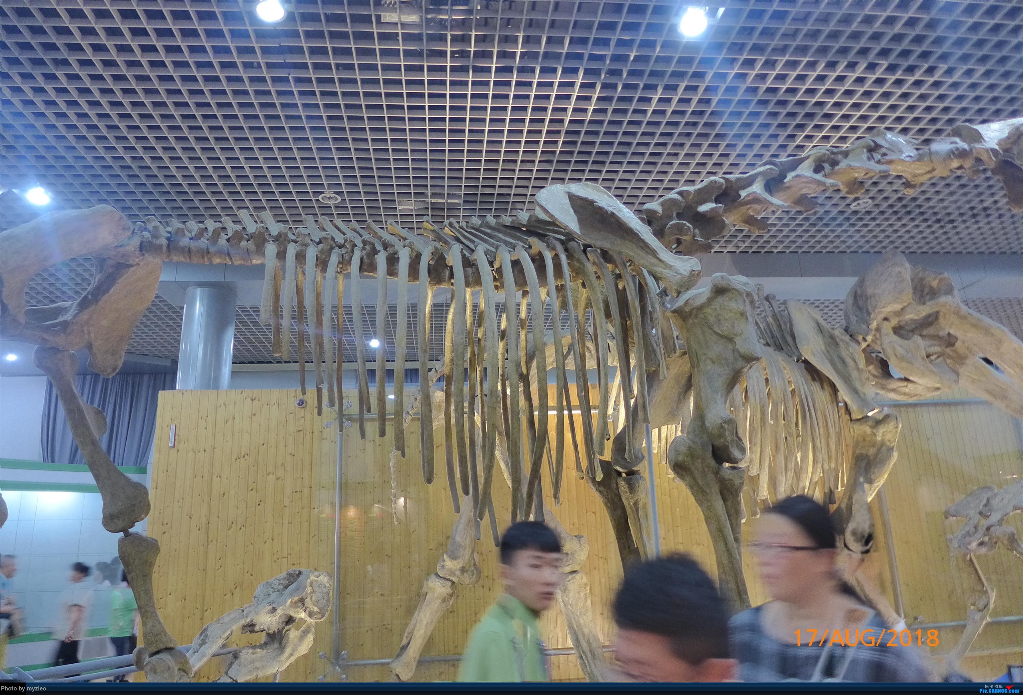 Re:[原创]【myzleo的游记3.2】三访帝都(2)——自然博物馆详解