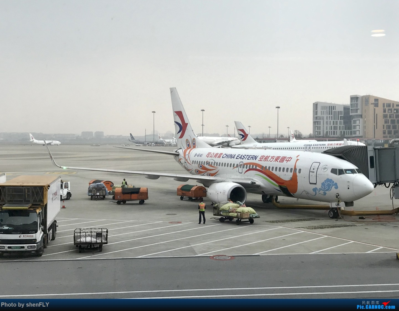 Re:[原创]【孔雀彩绘73G】NKG-KMG A332 C舱 & LJG-SHA B73G 孔雀彩绘 BOEING 737-700 B-6141 中国上海虹桥国际机场