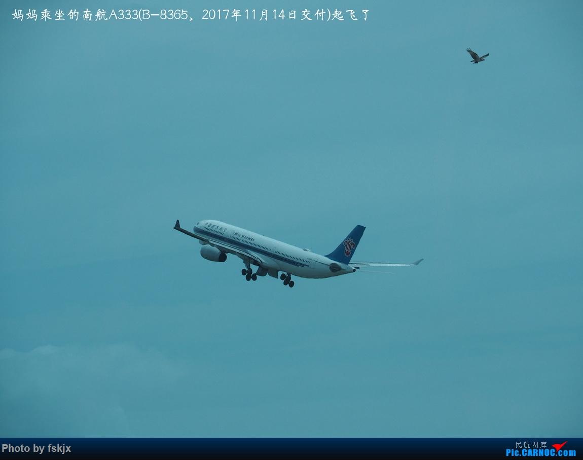 【fskjx的飞行游记☆68】在土澳的9天——黄金海岸·布里斯班·悉尼 AIRBUS A330-300 B-8365 澳大利亚布里斯班机场