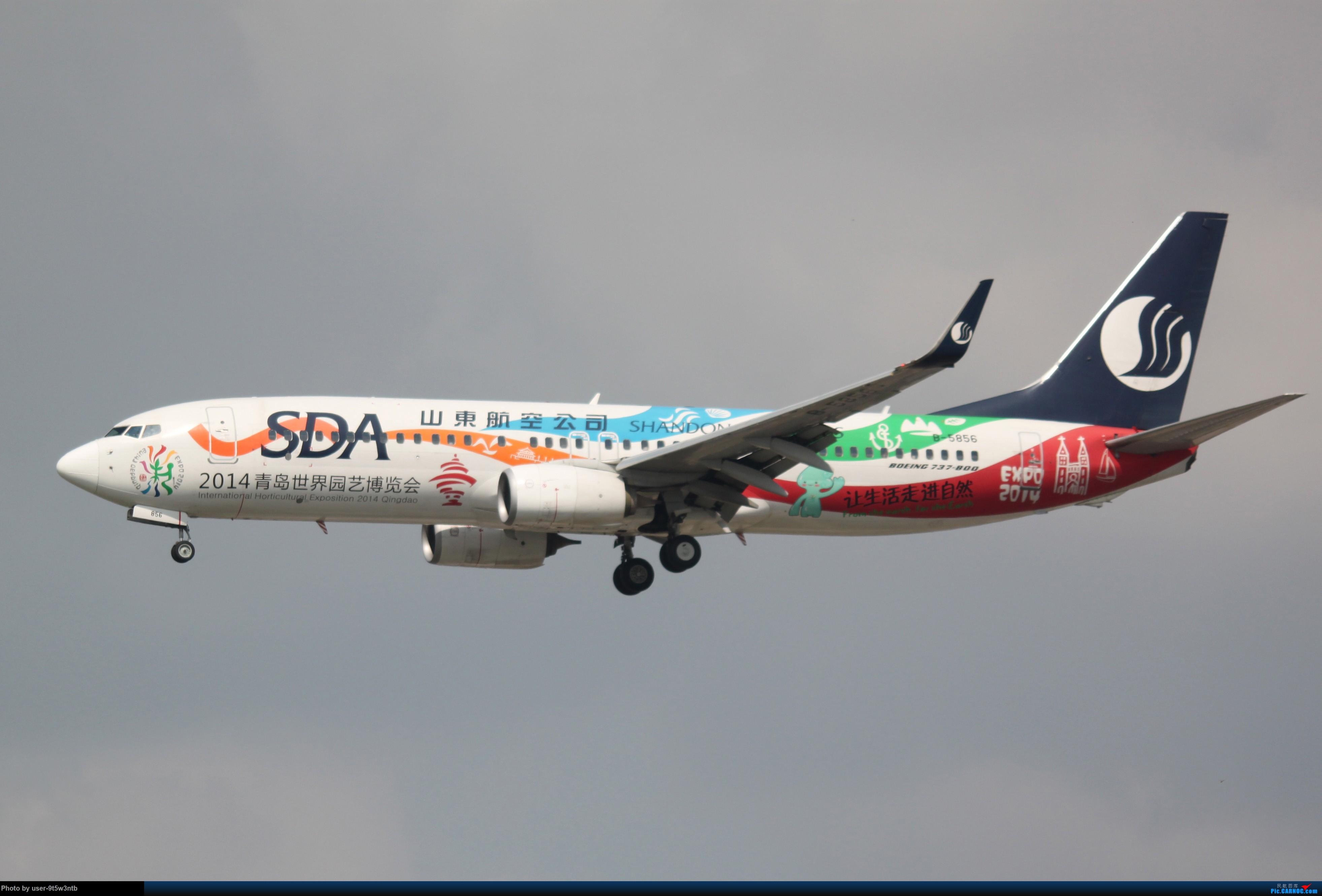 Re:[原创]来整理下最近在虹桥拍到的彩绘机吧~ BOEING 737-800 B-5856 中国上海虹桥国际机场