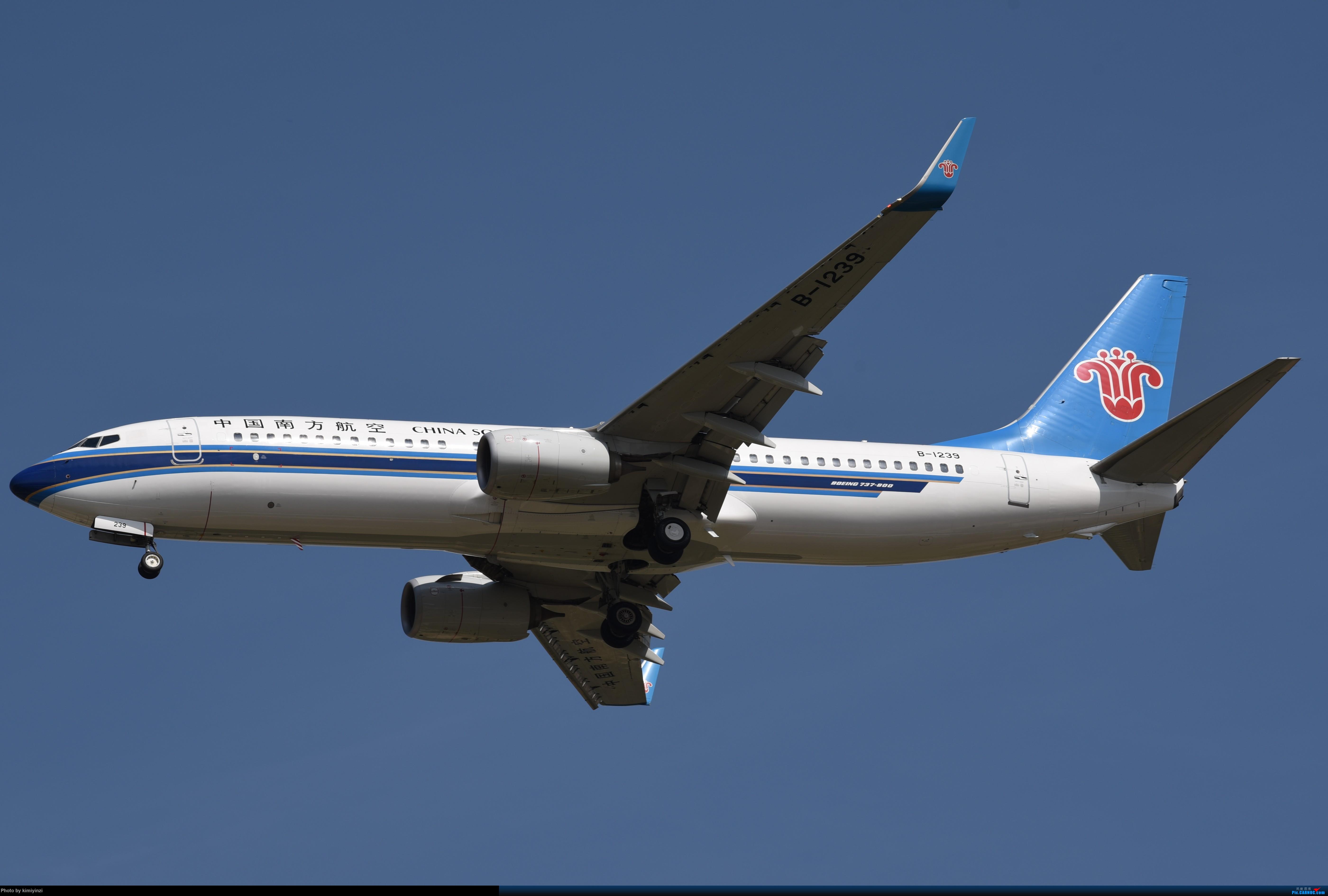 Re:[原创]KWE非常时期的贵阳龙洞堡 BOEING 737-800 B-1239 中国贵阳龙洞堡国际机场