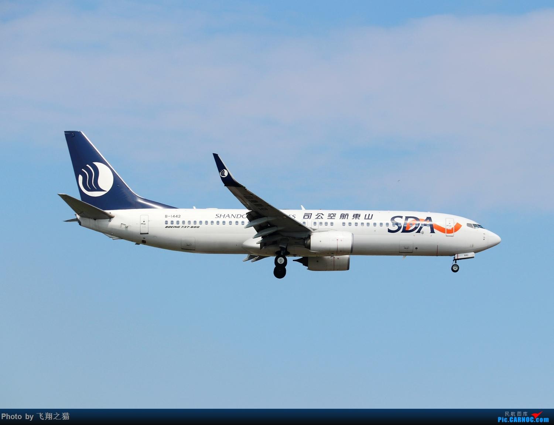 Re:[原创]Re:[原创]Re:[原创]CKG拍机(热炸天!) BOEING 737-800 B-1442 重庆江北国际机场